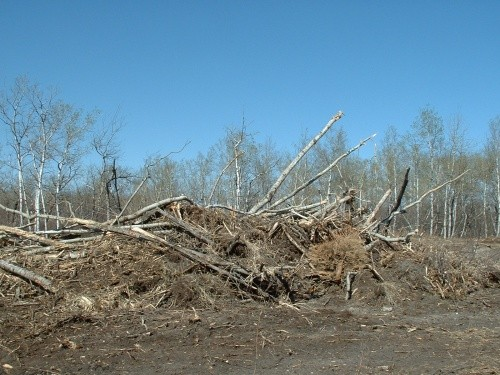 BEFORE - Burn Pile